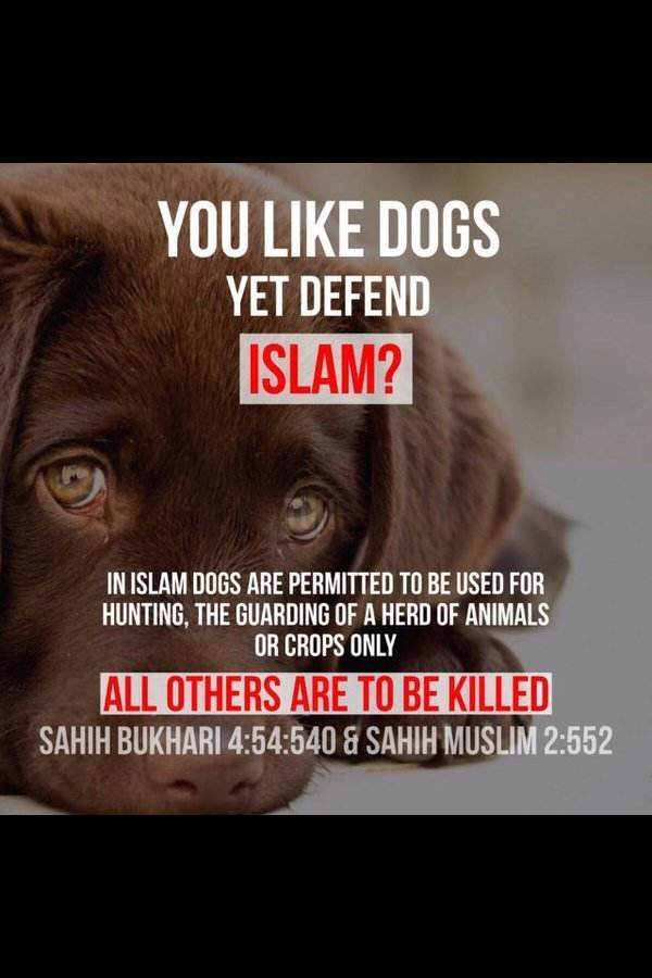 Muslims hate dogs