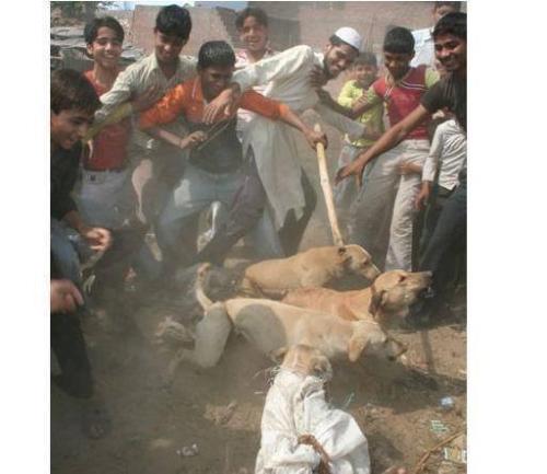 Muslims kick dogs