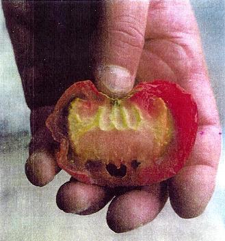 Allah in my tomato